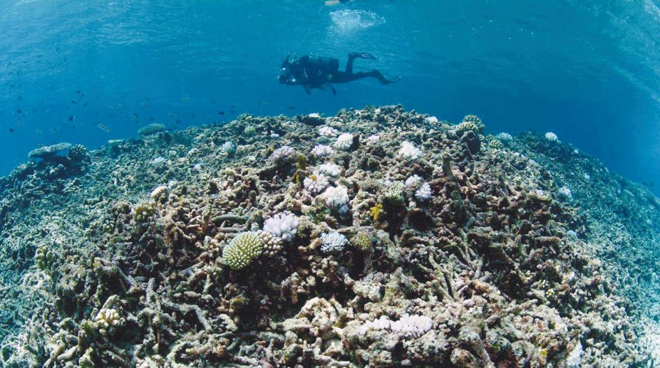 Bleaching events in recent years have highlighted the need for rapid action to save the world's coral reefs