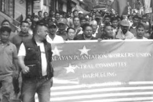 Trade union blocks Rangli-Rangliot tea dispatch