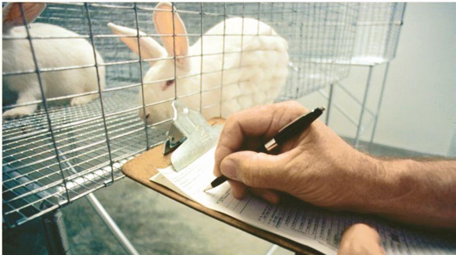 animals, zoology teacher, White Rabbits