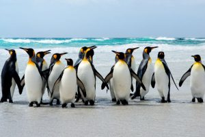 World Penguin Day | Climate change is dramatically altering their habitat