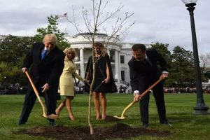 White House tree planted by Donald Trump, Macron Emmanuel vanishes