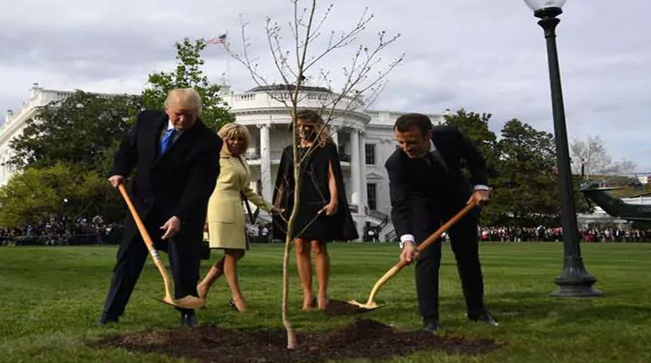White House Tree Planted By Donald Trump Macron Emmanuel Vanishes