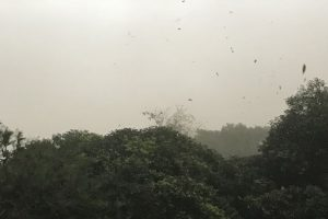 Delhi can expect light rain, thunderstorm today
