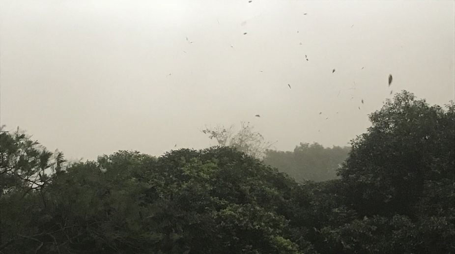 Dust storm and rain bring relief in Delhi-NCR from sweltering heat