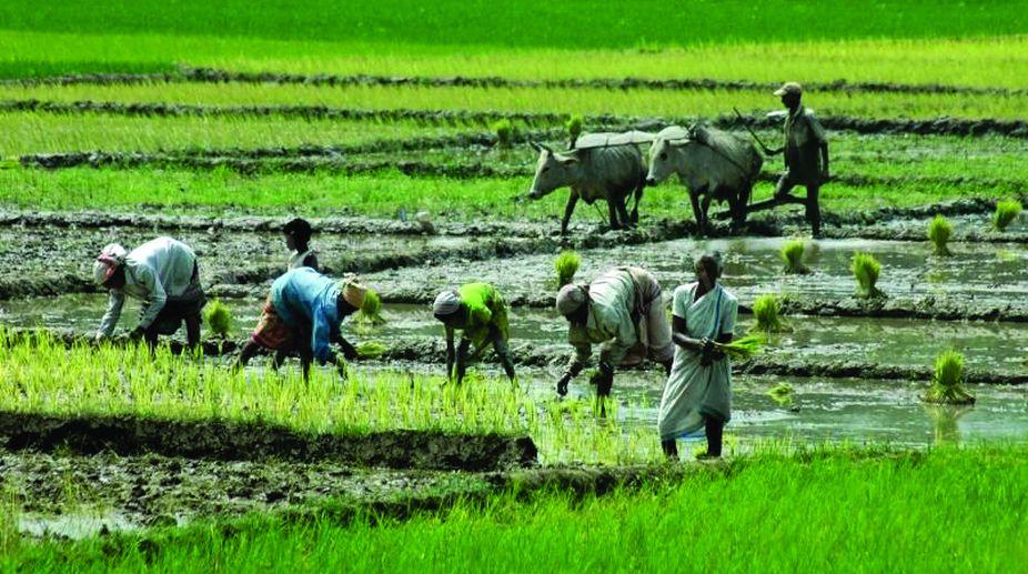 Himachal Pradesh, Himachal Farmers, agrarian economy