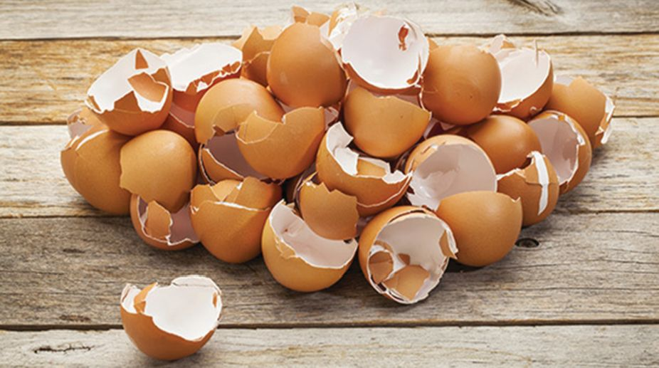 pile of broken eggshells