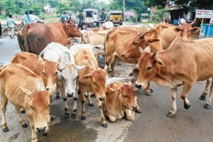 Shelter homes for stray cows and bulls in gram panchayats