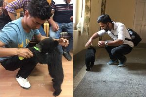 Check out this bear cub at the SDM office in Theog