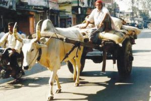 Animal-powered transport banned during day in Gwalior