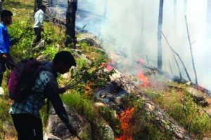 Rainfall helps in controlling U'khand forest fire