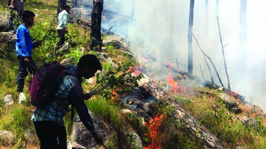forest fire, rainfall, Uttarakhand, forest department
