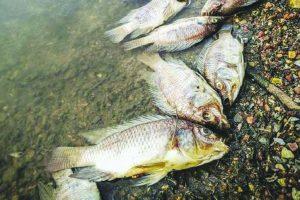 Govt behind man-made ecological disaster: SAD