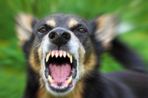 Dogs claim 14th life in Sitapur as pack mauls 8-year-old girl to death