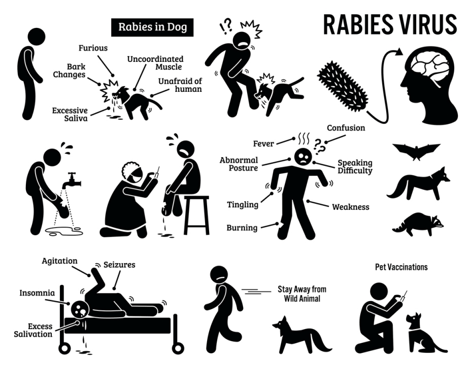 Rabies Infographic