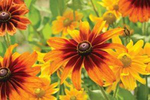 Help plants survive a heat wave
