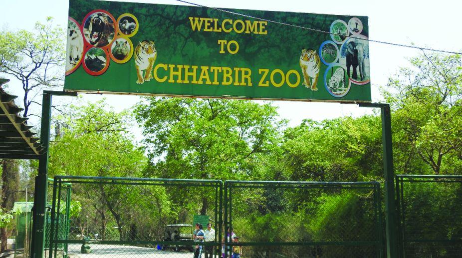 Chhatbir Zoo, Zoo, Chandigarh, Chandigarh Zoo