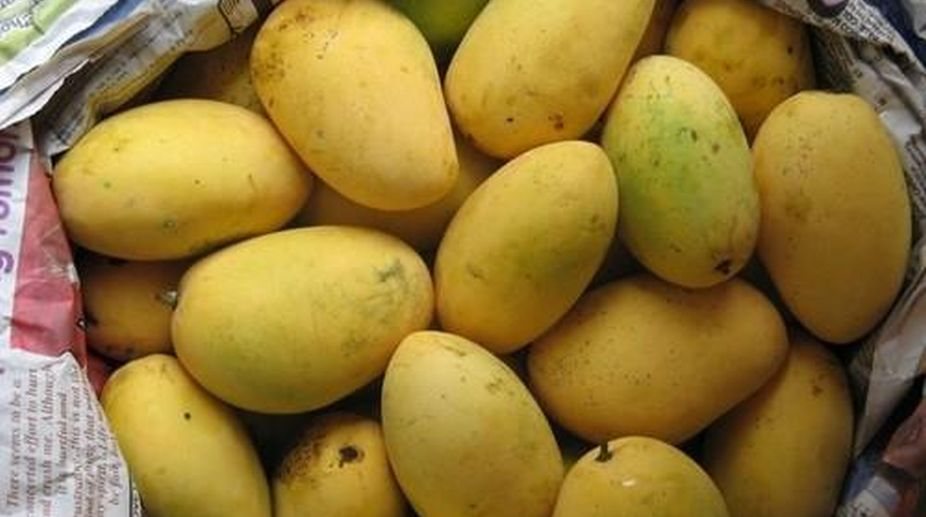 Chaunsa mango