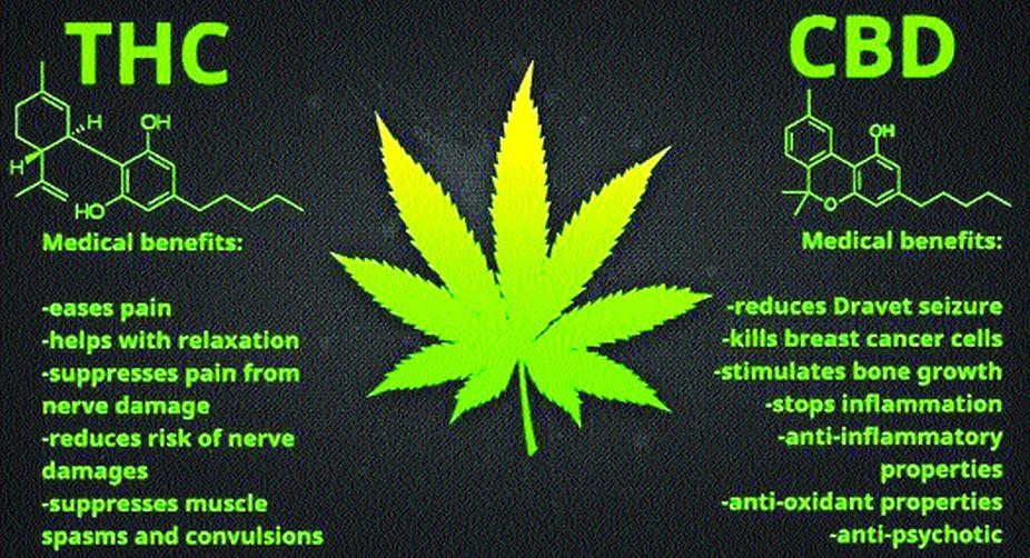 Sajid Javid, cannabis, medicinal cannabis, THC, CBD