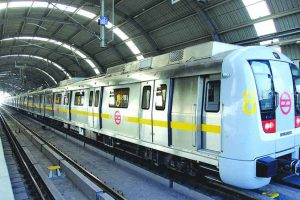Peacock disrupts service on Delhi Metro's Yellow Line