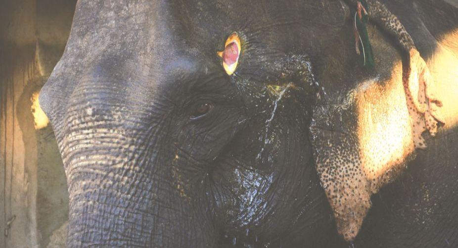 Mobile Elephant Treatment Service