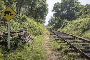 Train runs over elephant in Uttarakhand