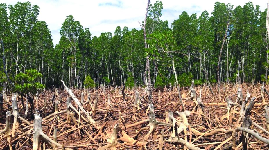 environmental pollution, Nature, Forest, natural conservation, Deforestation