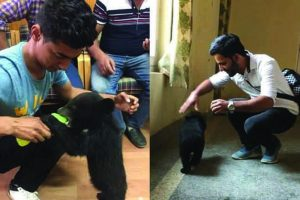 Unexpected guest surprises visitors at SDM office in Himachal