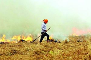 'Stubble burning cases down in Haryana'