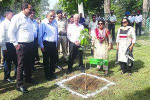 BBMB plants 11,000 saplings