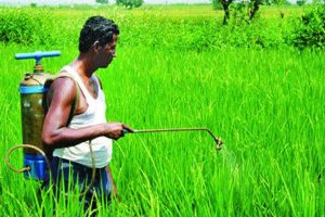 Cabinet may take up agri export policy this week