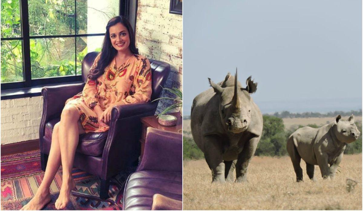 Baby rhino named after Bollywood actress Dia Mirza 6919949d6