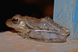 Frog sacrifice in rain-starved Bihar