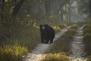 Army officer seriously injured in bear attack
