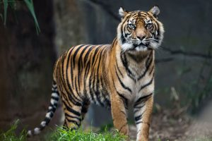 Target to double tiger population in India: Union minister Harsh Vardhan