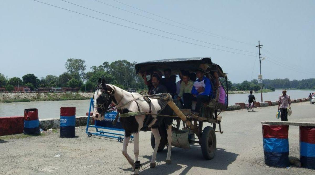 Tonga Animal Horse Uttarakhand