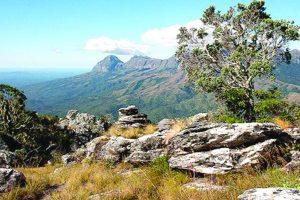 Focus: Destination Zimbabwe