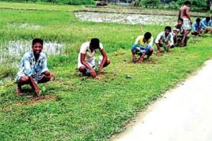 S Dinajpur takes up afforestation drive