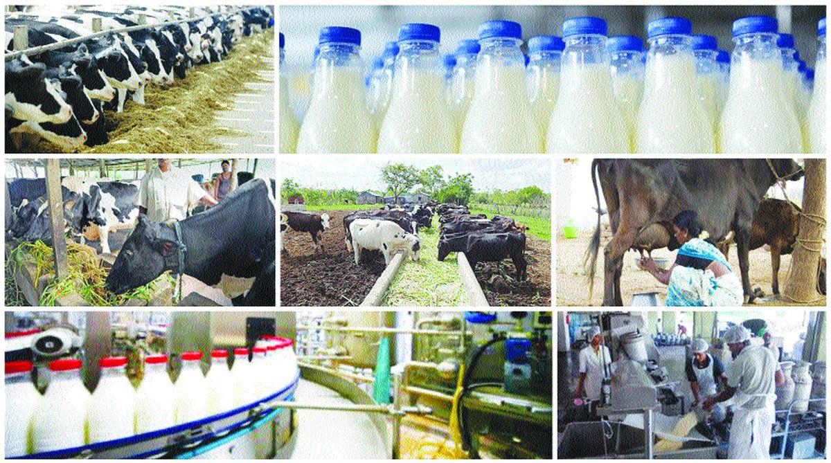 The ills of consuming milk