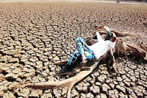 639 farmers ended lives in Maharashtra between March and May this year: Govt