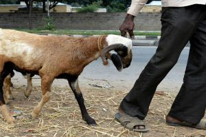 Haryana | Pregnant goat dies after being raped by 8 men in Mewat