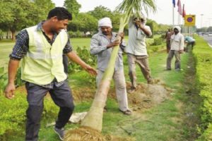 Delhi to plant 5 lakh trees, shrubs in a day
