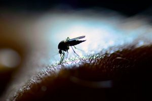 Global warming: Dengue marks presence in hills