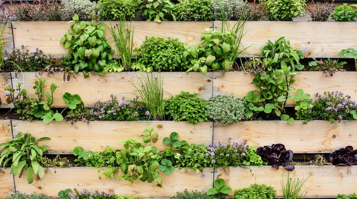 Garden, Plants, Herbs