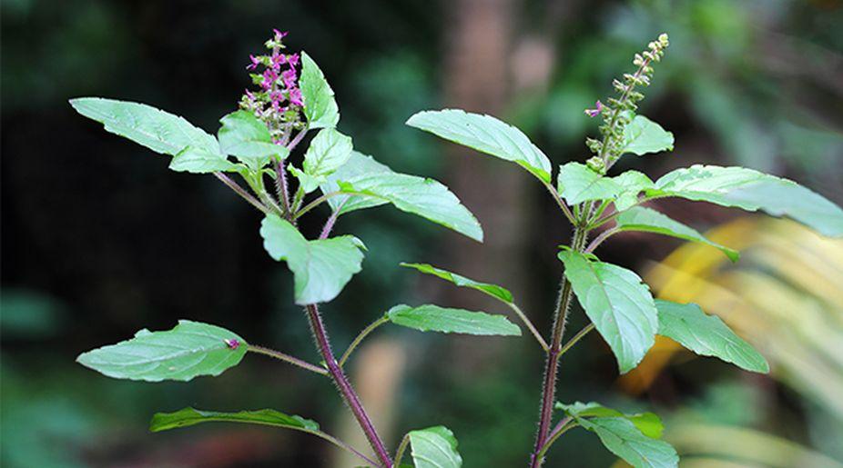 Dig Into The Best Versatile Herbs In Your Kitchen Garden