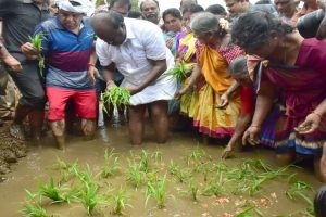 Karnataka CM turns farmer, sows paddy seedlings for bumper crop