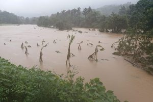 Floods ravage Karnataka coffee estates, facing heavy losses