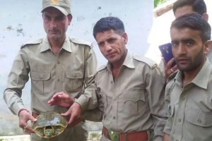 Turtle lands from nowhere in remote Uttarakhand village, to become star attraction