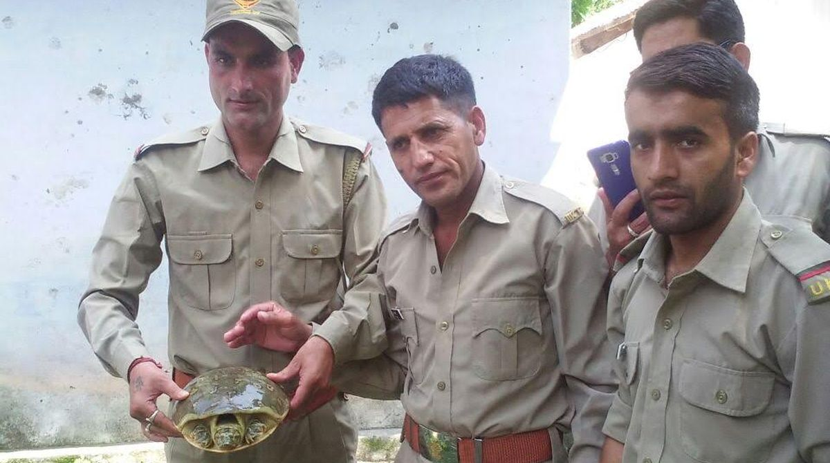 Uttarakhand Turtle, Uttarakhand, star Turtle