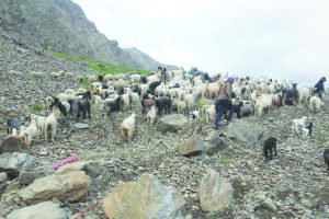 State steps in to help stranded shepherds