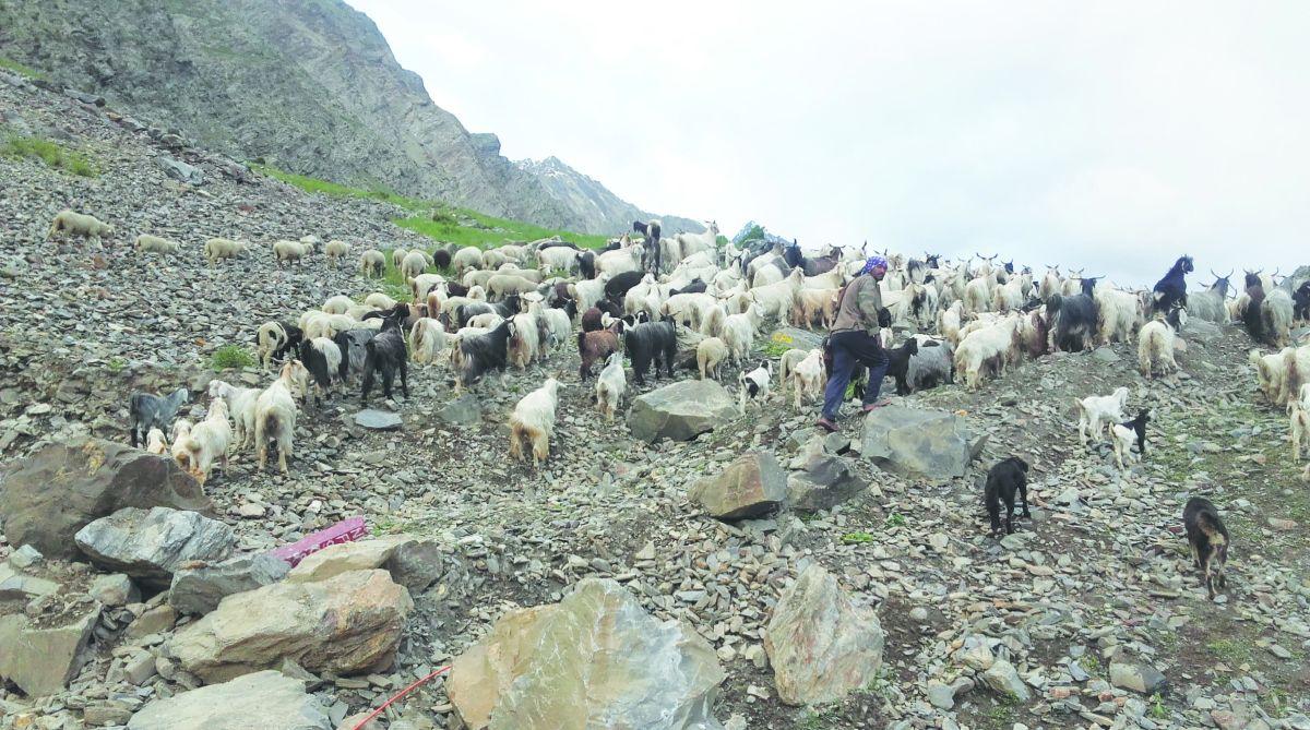 shepherds, Bara Bhangal, Baijnath Vikas Shukla, Thamsar Pass
